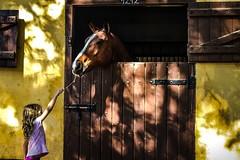 Quem tem amigo, tem tudo! (olhardecarmencita) Tags: parque animal amarelo criana menina cor cavalo hourse