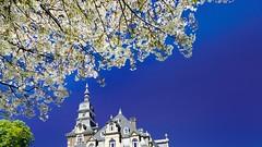 splendid day (Yasmine Hens) Tags: blue white flower europa flickr belgium ngc chteau namur hens yasmine wallonie iamflickr flickrunitedaward hensyasmine