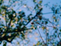 2015-09-28 10.41.13 1 (anastasiya_klenyaeva) Tags: sky nature yellow russia autmn     saratov vsco vscocam vscorussia vscosaratov