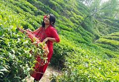 20160327_115005 (haider.bd) Tags: garden tea bangladesh teagardens srimongal aney