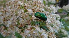 DSC01496 (omirou56) Tags: nature natur natura greece 169 ratio sonydscwx500