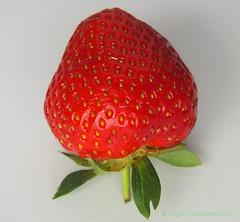 Strawberry One Fruit (edgarkowa) Tags: strawberry natural sweet fresh frucht fresco sss erdbeere frutilla frisch fresa