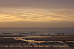 Belgian coast (Natali Antonovich) Tags: sea reflection beach nature water landscape seaside belgium belgique belgie seagull horizon northsea oostende seashore seasideresort belgiancoast seaboard