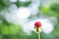 20160603-DSCF1242 (kissmuch) Tags: fruit strawberry bokeh fujifilm xt1 xf60mm