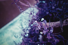 (The Daniel Garca) Tags: film lomo lomography purple phototgraphy lomochrome