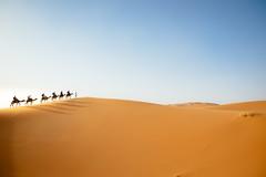 Just a line (Fabian De Salvo Photography) Tags: africa travel wallpaper sun hot sahara composition sand nikon desert adventure camel morocco tamron camels dromedar travelphotography d610