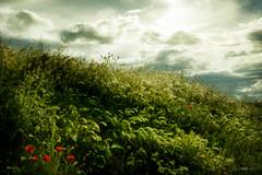 Springtime (Govall) Tags: flowers light sky flores green primavera clouds spring cielo poppies amapolas