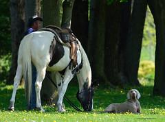 Le repos (anjoudiscus) Tags: horse dog chien canada cheval mai qubec rest boucherville horseriding repos d800 2016 quitation tc14 parcdelafrayre roseange nikkor300mmf4epf
