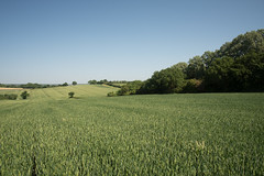 Chigwell prairie