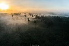 Raiesmik rkavas pevas (BlizzardFoto) Tags: morning fog forest sunrise beginning mets aerialphotography hommik udu algus aerofoto pikesetus raiesmik clearcutaera