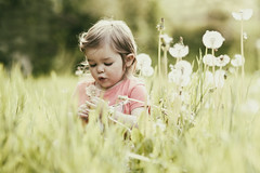 Fairy Dust (markfly1) Tags: family summer girl field grass children nikon soft long colours child daughter meadow 85mm pixie fairy d750 imagination dreamy dust depth dandelions