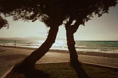 Together (Argyro...) Tags: sea tree beach seaside corinth greece  kalamiabeach