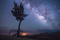 Starry Night at Utah's Bryce Canyon National Park (Beau Rogers) Tags: southwest tree night stars utah nationalpark desert unique astrophotography brycecanyon milkyway coloradoplateau desertsouthwest nighttimephotography