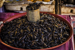 Cruncy Snack! (Baron Reznik) Tags: horizontal asia asien cambodia culture insects everydaylife  anlongveng insecta  kampuchea colorimage   kingdomofcambodia   canon24105mmf4lis   oddarmeancheyprovince victoriousnorthwest