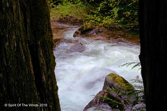 As It Rumbles By (jimgspokane) Tags: camping trees waterfalls washingtonstate forests creeks nikonflickraward