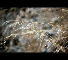 """Field... • <a style=""""font-size:0.8em;"""" href=""""http://www.flickr.com/photos/86056586@N00/6782316656/"""" target=""""_blank"""">View on Flickr</a>"""