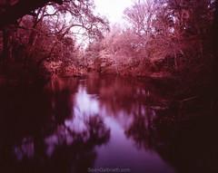 Sean_Galbraith_4x5-048.jpg (SeanGalbraith.com) Tags: park film nature river tampa landscape fuji state florida f 4x5 provia hillsborough hillsboroughriverstatepark shenhao fujiproviaf ptb45 shenhaoptb45