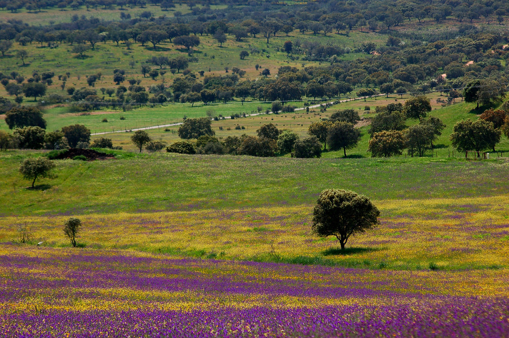 the world's best photos of campo and violetas - flickr hive mind