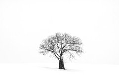 Cold Isolation (jasohill) Tags: life city winter sky bw white snow tree monochrome japan dark landscape japanese hope spring branches depression backgrounds 日本 木 冬 岩手県 東北 tohoku 風景 desolation matsuo 2012 hachimantai 三月 季節 松尾 ひとりぼっち mygearandme ringexcellence