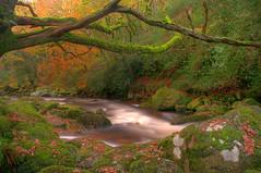 Dewer's Wood (Morpheus71 Photography) Tags: autumn devon dartmoor autumnal hdr hunt dewer shaughprior photomatix wildhunt dewerstone riverplym morpheus71 dewerstonewoods wisht wishthounds dewerstonewood wishthuntsman