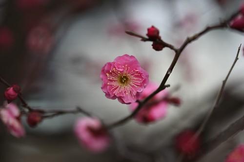 春~Spring