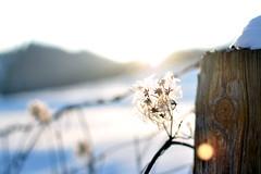 sunday afternoon (gesternumdiesezeit) Tags: austria österreich upperaustria 2012 winter dof schnee cold sun
