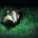 Badger cpt Darin Smith