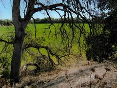 SAM_3363 (jddau) Tags: landscapes sacramentovalley