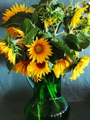 Filled with Sunshine (Cher12861) Tags: stilllife yellow sunflowers vase happyflowers