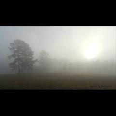Foggy........ February 16, 2012 (gailpiland) Tags: morning trees field landscape foggy shining vividimagination sooc photohraphy flickraward spiritofphotography nikonflickraward gailpiland crazygeniuses