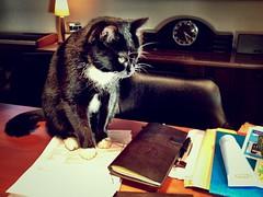 Midori Approved (spoedman) Tags: moleskine notebook journal stationary spoedman christophelaurent notebookism chronodex midorimidoritraveljournal