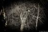 Prova tu.. (Antonio Buccella) Tags: nature water canon eos dramatic natura tuscany 7d f56 toscana tamron acqua cascade vc usd f40 cascata muraglione sangodenzo focalpoint2 lightroom4 sp70300mm