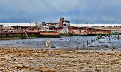 What We Forget (Fairlane221) Tags: ny newyork abandoned ship shipwreck hulk statenisland steamship steamer derelict witte rossville newbedford arthurkill stcrapyard ssnewbedford