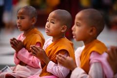 Evening prayer at Shwedagon Paya (Lil [Kristen Elsby]) Tags: travel pink girls girl children asia child shwedagon yangon burma buddhist topv1111 bama buddhism mama nun nuns editorial myanmar 7020028l burmese saffron reportage shwedagonpagoda rangoon novice travelphotography shwedagonpaya 70200f28l myanma shwedagonzedidaw novicenuns canon5dmarkii novicenun myanmar2012 flickreditorial