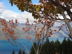 Fall Foliage, Bob's Peak, Queenstown (dannymfoster) Tags: autumn newzealand fall nz southisland queenstown lakewakatipu bobspeak skylinegondola