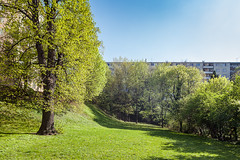 110 / 365 - green valley @ Max-Patat-Weg (Matthias Obergruber Photography) Tags: vienna city trees tree green grass landscape austria spring cityscape meadow greenvalley dbling 1190 at maxpatatweg