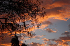 (christineriesgo) Tags: light sunset shadow sky orange black tree silhouette clouds treesilhouette horizon backlighting lincolnroad blackclouds orangeclouds