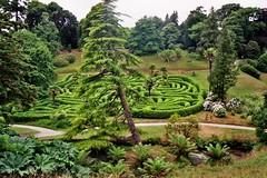 Angleterre, Cornwall, Glendurgan Garden (byb64) Tags: park england garden cornwall jardin angleterre laurier parc gunnera cornouailles labyrinthe glendurgan greenscene glendurgangarden théier