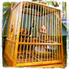 นกกรงหัวจุกที่ฐาน