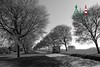 Lonely Afternoon (A.L-Photos) Tags: park trees spring path rows shelter avenue