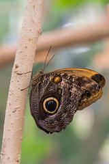 (Stephen Hennessey) Tags: california ca butterfly zoo safaripark sandiegocounty butterflykingdom sandiegozoosafaripark