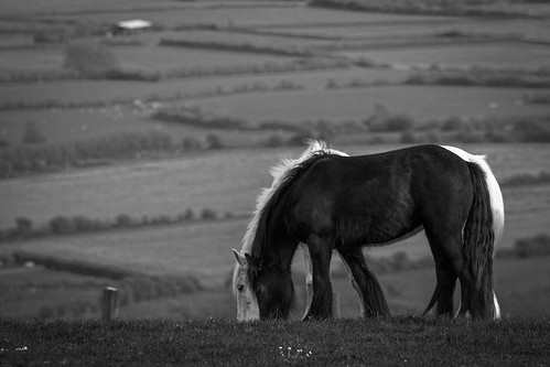 Untiltled... (74384687@N02), photography tags:  horses canon is hill 70200 f4 bleadon canon600d