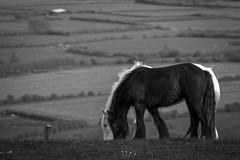 Untiltled... (Rabc3) Tags: horses canon is hill 70200 f4 bleadon canon600d