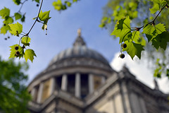 EXISTENCE AND IT'S FRAILTIES (DESPITE STRAIGHT LINES) Tags: city uk england building tree london tourism church nature leaves saint architecture nikon worship flickr raw day branch cathedral god branches faith religion jesus goddess stpaul belief tourist foliage holy architect bible gods christopherwren gps stpaulscathedral mothernature existence d800 centrallondon follower thebible churchofengland sirchristopherwren paulwilliams ludgatehill religiousbelief nikon70200mm nikkor70200mmf28 lorenzogafa nikond800 nikongp1 despitestraightlines ilobsterit stpaulscasthedral