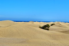 Maspalomas Sand Dunes (Stuart Lilley Photography) Tags: beach spain sand nikon dunes dune beaches maspalomas d3200