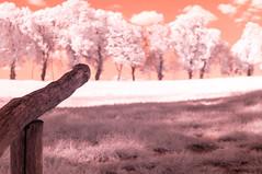DSC02050 (FritzchensFritz) Tags: colors infrared schloss false infrarot heliopan falschfarben meseberg huwenowsee ir645