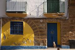 Cadiz (antoniofmg) Tags: street door espaa dog color window ventana calle spain puerta andalucia perro cadiz fachada