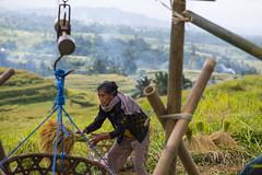 sawah 5 (Fakhri Anindita) Tags: bali nature field indonesia landscape photography nikon farm ubud sawah jatiluwih