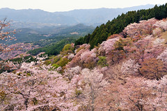 makeup (y2-hiro) Tags: mountain japan cherry spring sakura