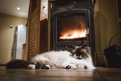 Hot stuff (FEGO Photographies) Tags: hot cat fire chat fuji fujifilm x100 fego fegoguer franckemanuelgoguer x100t fujifilmx100t